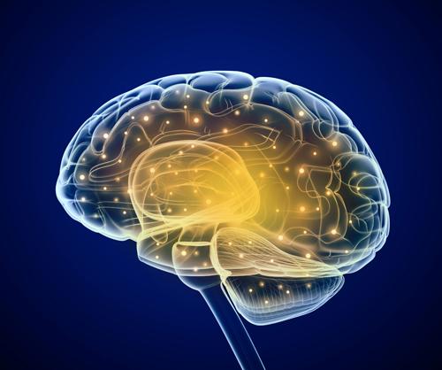 Brain-Large